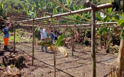 Centro María Elena Moyano, instala 70 sistemas agroforestales, en 5 comunidades de Chazuta y Shapaja- Región San Martín