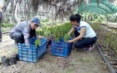 ENTREGA DE PLANTONES FORESTALES SHIRINGA-ACCION CLIMÁTICA CONTINUA-EN CHAZUTA-SHAPAJA SAN MARTIN